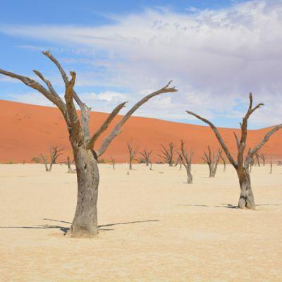 paysage namibie